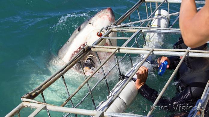 Buceo Con Tiburones Ciudad del Cabo