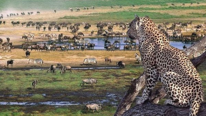 Cráter de Ngorongoro Tazania