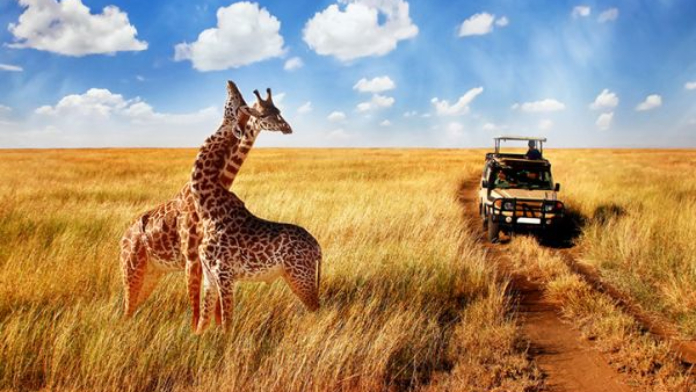 Jirafas Serengeti Tanzania
