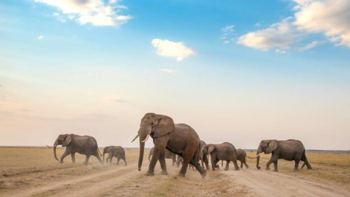 Parque Nacional Amboseli Kenia