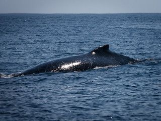 canadi-quebec-charlevoix-con-ballenas-1024.jpg