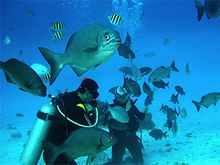 colombia-san-andres-buceo-461.jpg