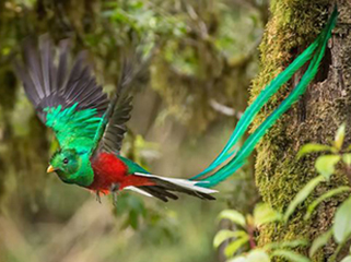 guatemala-tikal-quetzal-282.jpg