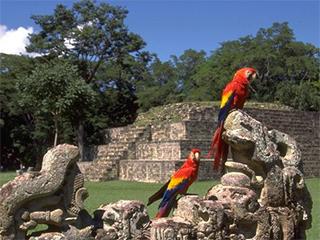 honduras-copan-parque-arqueologico-147.jpg
