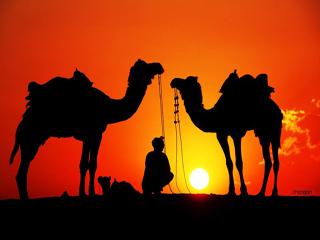 india-india-jaisalmer-778.jpg