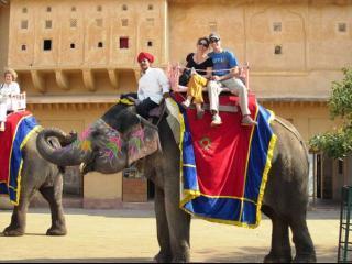 India Jaipur Elefante