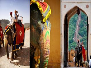 india-jaipur-elefantes-al-fuerte-amer-765.jpg