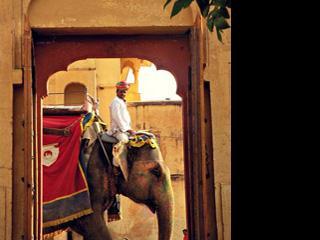 india-jaipur-elephant-578.jpg