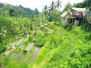 Indonesia Ubud Plantaciones