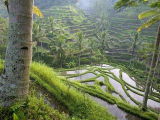 indonesia-ubud-ubud-724.jpg