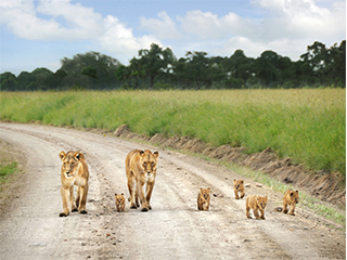kenia-masai-mara-leones-529.jpg