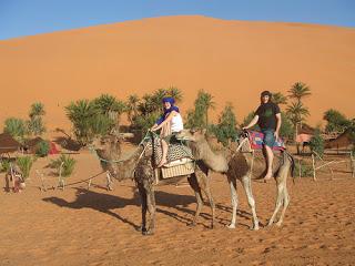 Marruecos Desierto Dromedario