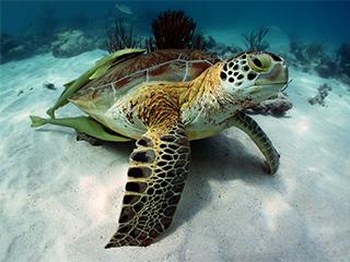 mexico-akumal-tortugas-404.jpg