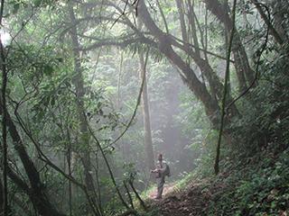 mexico-chiapas-bosque-de-niebla-473.jpg