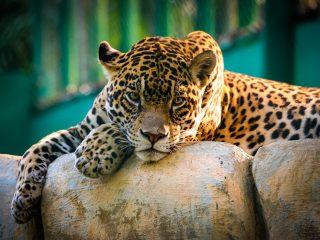 Agencia de viajes para Chiapas en México