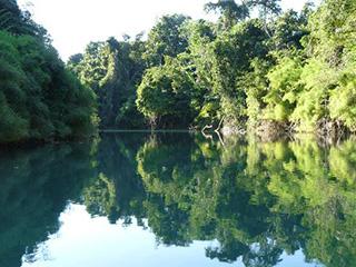 mexico-chiapas-gaucamayas-rio-lacantun-468.jpg