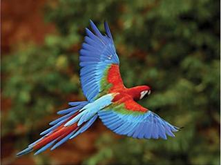tiquetes aéreos para Chiapas