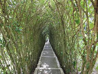 mexico-chiapas-guacamayas-andador-467.jpg
