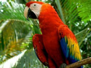 mexico-chiapas-las-guacamayas-8.jpg