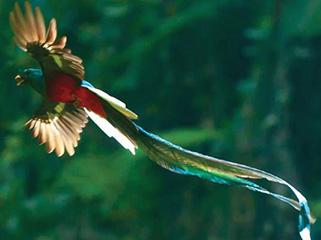 mexico-chiapas-quetzal-en-biosfera-el-triunfo-469.jpg