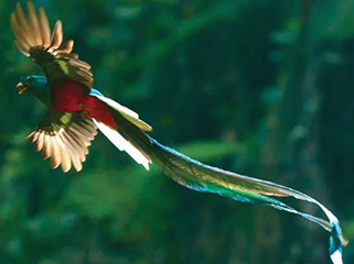 Tour a Chiapas desde Punta del Este Salto