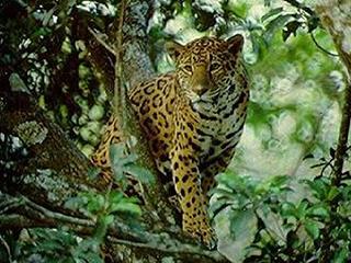 mexico-tuxtla-gtz-jaguar-zoomat-442.jpg
