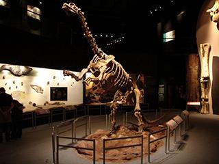mexico-tuxtla-gtz-museo-de-paleontologia-444.jpg