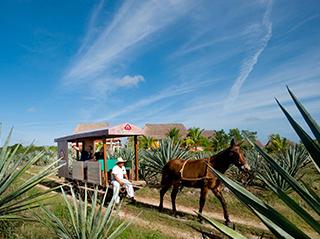 Mexico Yucatan Hacienda Sotuta Peon