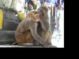 nepal-kathmandu-monkey-temple-711.jpg