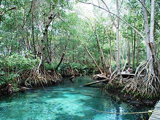 mexico-yucatan-celestun-346.jpg