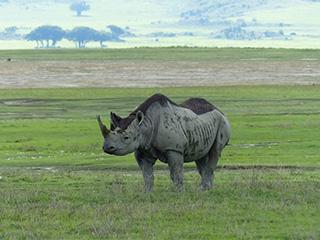 Tanzania Ngorongoro Ngorongoro