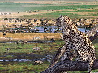 tanzania-ngorongoro-ngorongoro-797.jpg