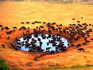 Tours a África Todo Incluido 2021