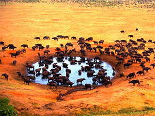 Tanzania Serengeti Parque De Serengeti